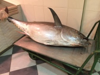 Tuna in the fish market....not from my rod