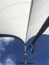 nice shape of twin headsails