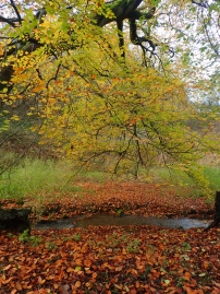 Autumn in Derbyshire