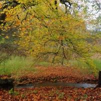 Autumn in Derbyshire