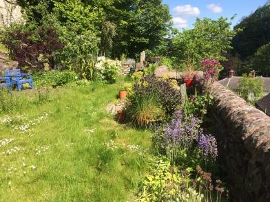 My overgrown garden