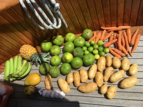 washing fruit and veg in Jamaica