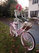 Skeletal cycling