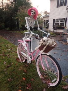 Skeletal cycling