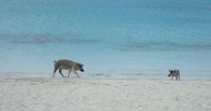 Just walking the beach